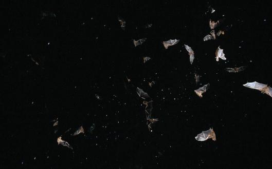 Vol de nuit-1