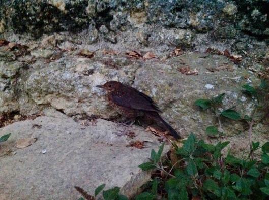 Oiseau-3