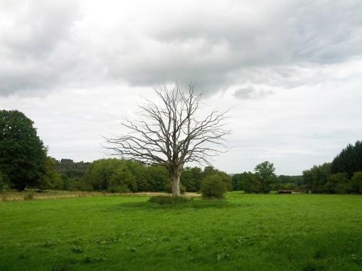 langle-mort