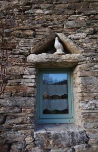marlen-sauvage-colombe