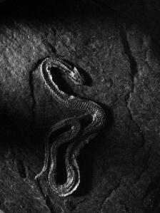 serpent sec