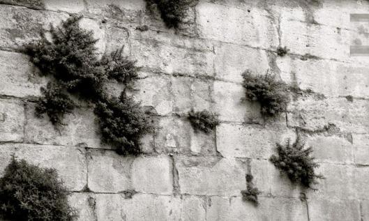 pour les cosaques - ce mur sans fin